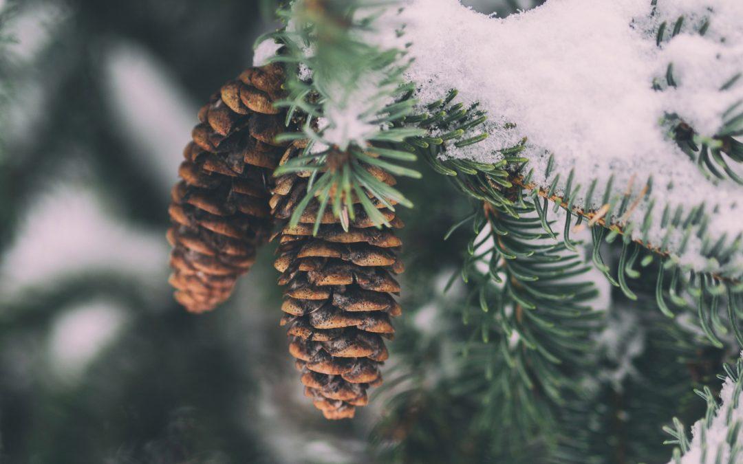 Warme Winter & Zen gezichtsbehandeling